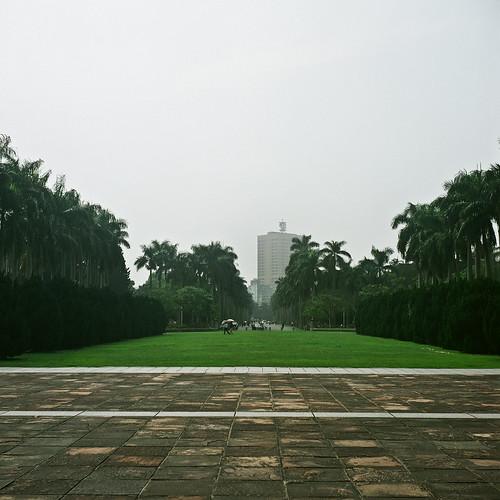 台大振興草坪