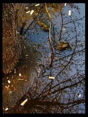 Natural mirror (NeveInMyMind) Tags: autumn sky italy rome roma reflection tree water leaves foglie puddle italia olympus cielo cigarettes albero acqua autunno riflesso sigarette c370 pozzanghera