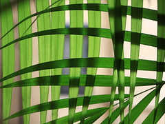 braid (jenny downing) Tags: light shadow plant abstract france green leaves lines shadows bright lyon mesh greenery woven crisscross weave interwoven interlace basketry inandout plait pannier potplant laced infrance intertwine overandunder jennypics basketwork takeninfrance jennydowning photobyjennydowning