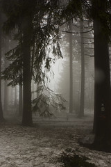 Spooky {EXPLORED} (Aqua Libra) Tags: trees mist snow germany explore winterberg explored nordenau flickraward flickraward5 flickrawardgallery