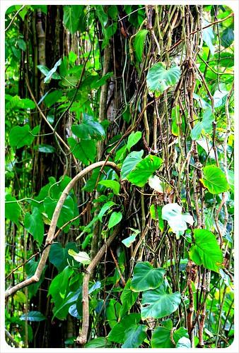 Cahuita national park jungle