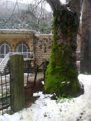 Lichen et ferraille. (Gilbert-Noël Sfeir Mont-Liban) Tags: lichen ferraille arbre baum schnee neige hiver winter snow kesserwan liban montliban mountlebanon lebanon tree