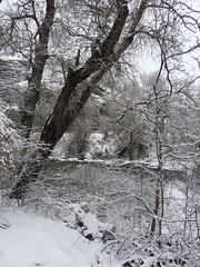 IMG_2203 (augiebenjamin) Tags: winter provocanyon mountains orem provo lindon utah snow clouds trees sky byu brighamyounguniversity art