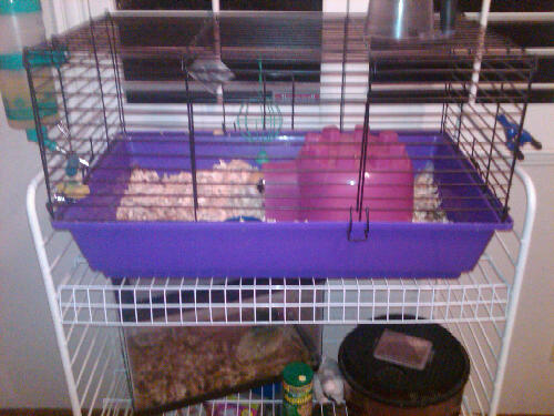 Small pet cage odor