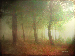 La magia de los bosques ...   The magic of forest ... (tan.solo_milenia .) Tags: best sensational visualart ourtime objectiveart worldbest platinumphoto platinumphotograph thesuperbmasterpiece spiritofphotography multimegashot ourmasterpieces sharingart awardtree kunstplatzlinternational beyondclick artofimages yourwonderland flickrvault magicunicornverybest trolledproud
