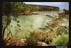 Royal national park (Wildertag) Tags: ocean sea texture nature d50 nikon oz australia nsw paysage royalnationalpark idream greenscene imagofabulae