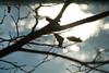 365_315 / Bare Branch Bokeh (DAJanzen) Tags: silhouette bokeh bluewater elginil foxriver intothesun barebranches sparklingwater nikond200 foxrivervalley unseasonablywarm lateafternoonsunlight slighttexture riverfrontwalkway whatadayforawalk acoupleofdriedleaves