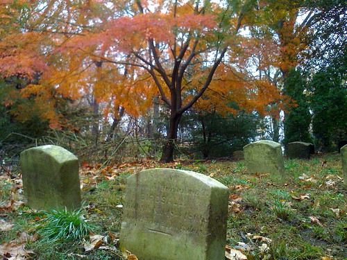 Quaker gravestones w maple tree