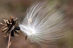 seeds14