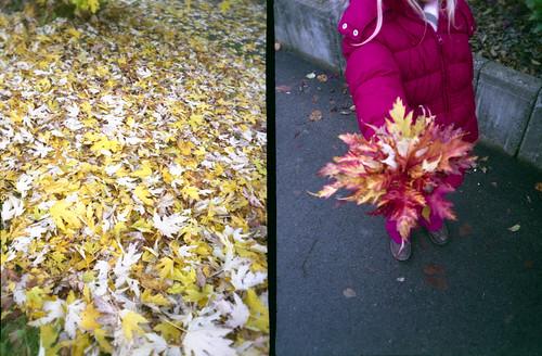 leaves | bunch of leaves