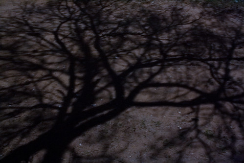 Tree shadow in moonlight