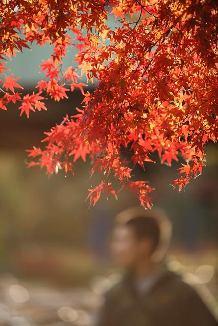 残秋の色合い