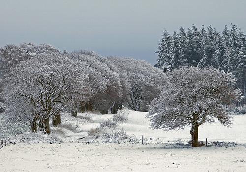 Snowscape or entrance to winter wonderland