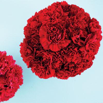carnation-bouquets-1209-l