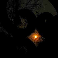 heavy-hearted (<Younes>) Tags: sunset tree fence iran tehran ایران درخت تهران غروب نرده younes heavyhearted یونس دلتنگی کلاهدوز kolahdouz