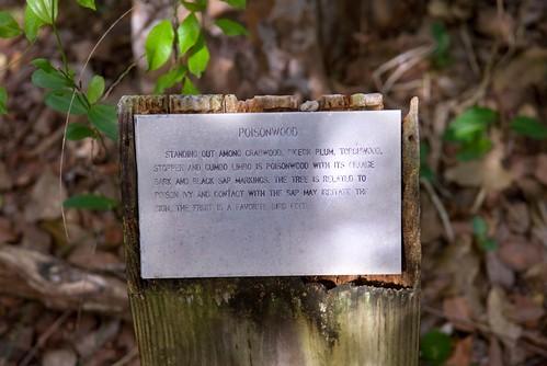 poisonwood bible essay questions