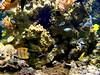 2001-03-25 03-29 Rügen 024 Stralsund, Meeresmuseum