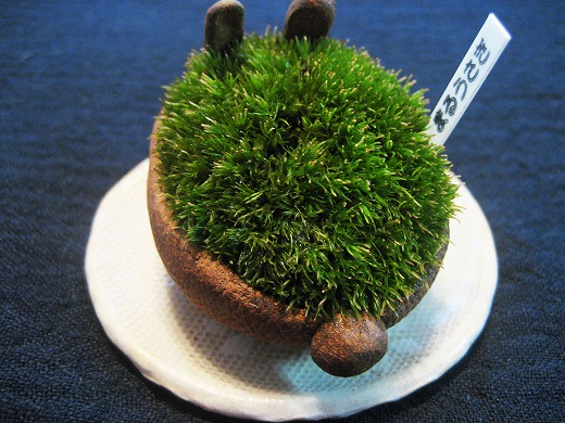 Moss in Rabbit Bowl