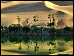 Umm El-Ma'a  Oasis Lake ! (Bashar Shglila) Tags: world lake reflection sahara water reflections photography sand gallery photos top dunes dune best palm most oasis um worlds popular libya reflexions u