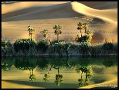 Umm El-Ma'a  Oasis Lake ! (Bashar Shglila) Tags: world lake reflection sahara water reflections photography sand gallery photos top dunes dune best palm most oasis um worlds popular libya reflexions umm ام في maa بحيرة الصحراء الحياة libyen وادي الماء ليبيا desertt líbia libië libiya awbari الليبية liviya الجماهيرية libija либия توارق اوباري البحيرات updatecollection ливия լիբիա ลิเบีย lībija либија lìbǐyà libja líbya liibüa livýi λιβύη elmaa virgiliocompanyspecialaward ايموهاغ هقار potd:country=menaar