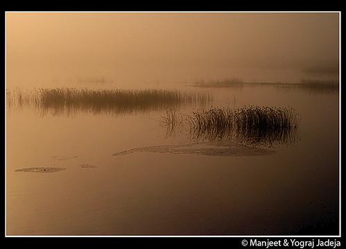 misty dawn at khijadiya