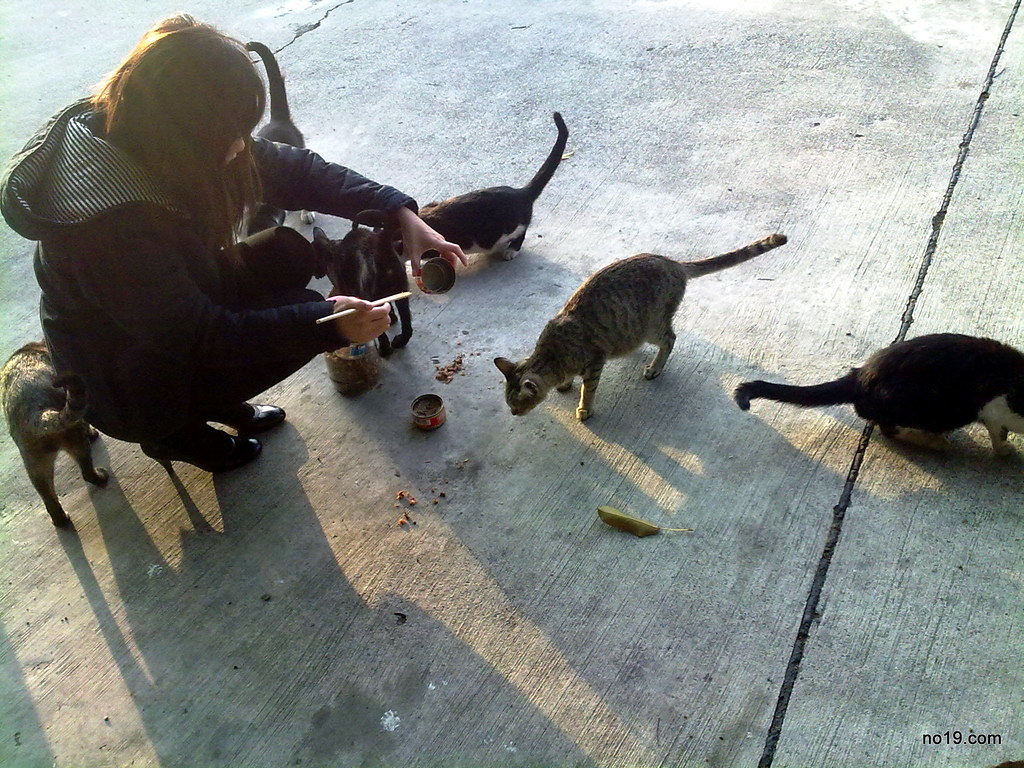 餵養流浪貓的小姐 - 20100116176