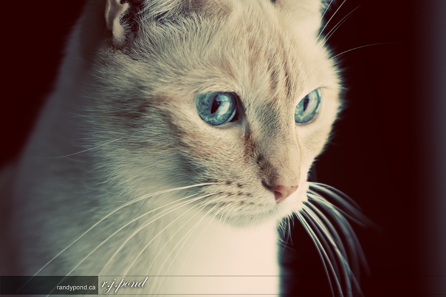 ~ 22/365 Nahla Pearl ~
