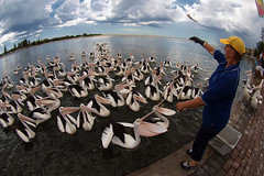P2123003 (Steve Daggar) Tags: olympus pelican fisheye centralcoast 8mm theentrance zd fotocompetitionbronze