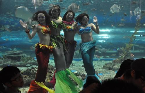 Ocean Park Manila mermaids