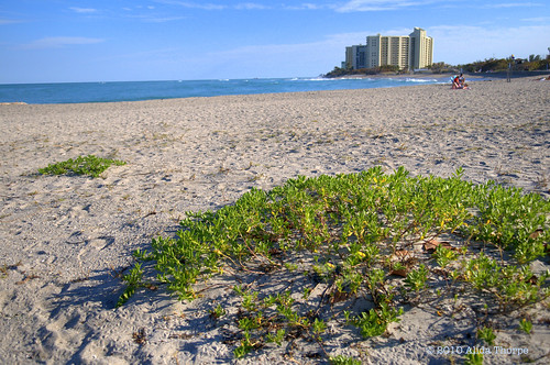 Jupiter Beach Park by Alida's Photos