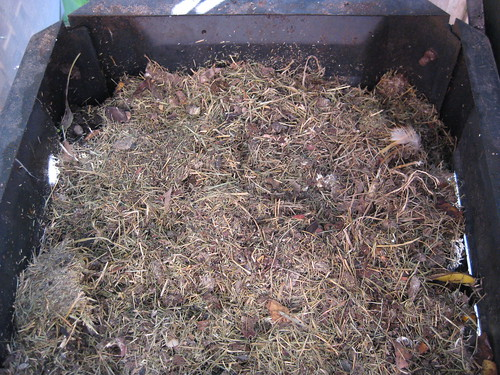 Hay Chicken Bedding in Compost