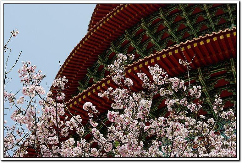 天元宮,櫻花 (5)