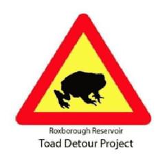 Toad Detour