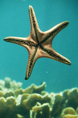 Parked Star (photo.klick) Tags: coral aquarium starfish oz australia photoblog qld queensland jol townsville reefhq katsingercom