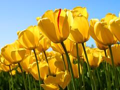 imágenes de primavera