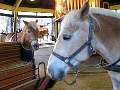 Viena -Prater - carrossel (L Dion) Tags: vienna wien horse caballo austria sterreich carousel viena osterreich cavalo karussell prater carrousel carrusel carrosel