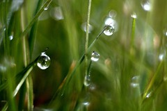 Dew Drop Abstract.... (jillyspoon) Tags: morning green water grass dawn droplets bokeh drop depthoffield dewdrop dew canon450d canon450dukusers