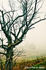 Je te devine l-bas (Sous l'Oeil de Sylvie) Tags: morning fog rural pentax champs deadtree arbre brume cabane herbe matin beauce lightroom k7 arbremort intimit notredamedespins sousloeildesylvie
