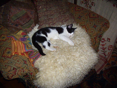Sleeping kitten on sheepskin