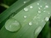 Water droplets, Wellington, New Zealand