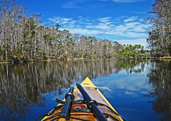 March Madness (todonn9364) Tags: reflections kayaking alligatorrivernc