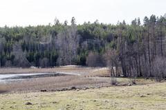"""Mitt i tjurarnas hage ner mot sjön <a style=""""margin-left:10px; font-size:0.8em;"""" href=""""http://www.flickr.com/photos/24944122@N05/13187282065/"""" target=""""_blank"""">@flickr</a>"""