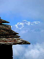 a roof above (com4tablydumb) Tags: india tourism nature trek scenery wildlife hills uttaranchal himalayas monal northernindia uttarakhand tungnath chopta monalpheasant alpinehabitat