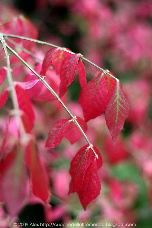 Foglie rosa