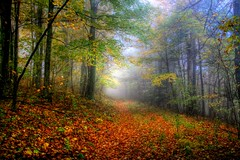 A Forest Path ( D L Ennis) Tags: mist fall misty fog forest virginia path foggy backroad blueridgemountains jeffersonnationalforest dlennis aforestpath trailautumn