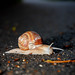 134. Snail on the road :-)