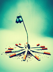 Smoking kills slowly 2 (7LM) Tags: smoke marlboro ورد دخان 7lm xx7lmxx