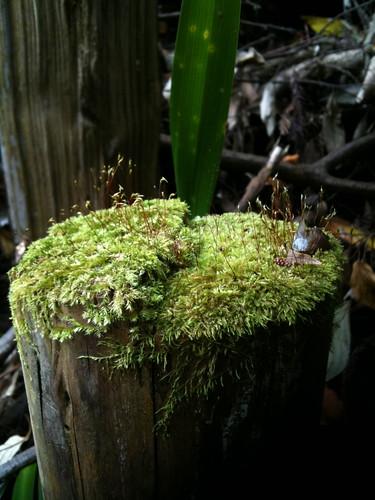 木の杭の上の草原