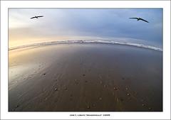 El mundo es redondo (Ariasgonzalo) Tags: paisajes beach landscapes seascapes asturias thesea gaviotas elmar playas cantbrico xag flickrestrellas alemdagqualityonlyclub photoshopcreativo