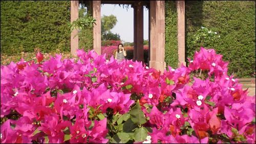 Umaid Bhawan Palace gardens